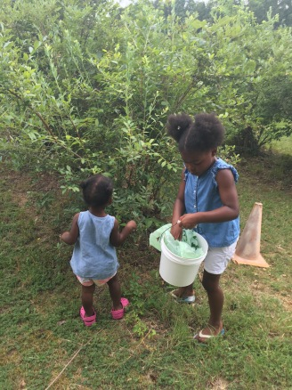 Blueberry Picking Helpers